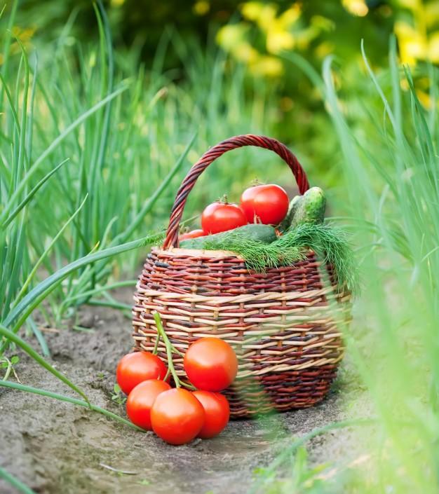 jardin agroécologique