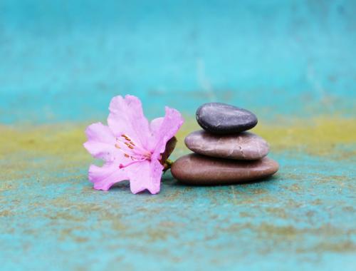 image d'une fleur et de pierres