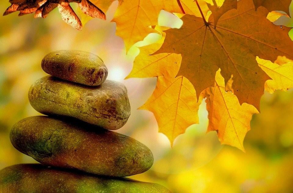 nature avec feuille et pierre